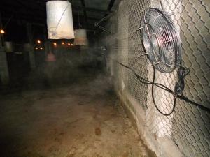 chladenie zvierat